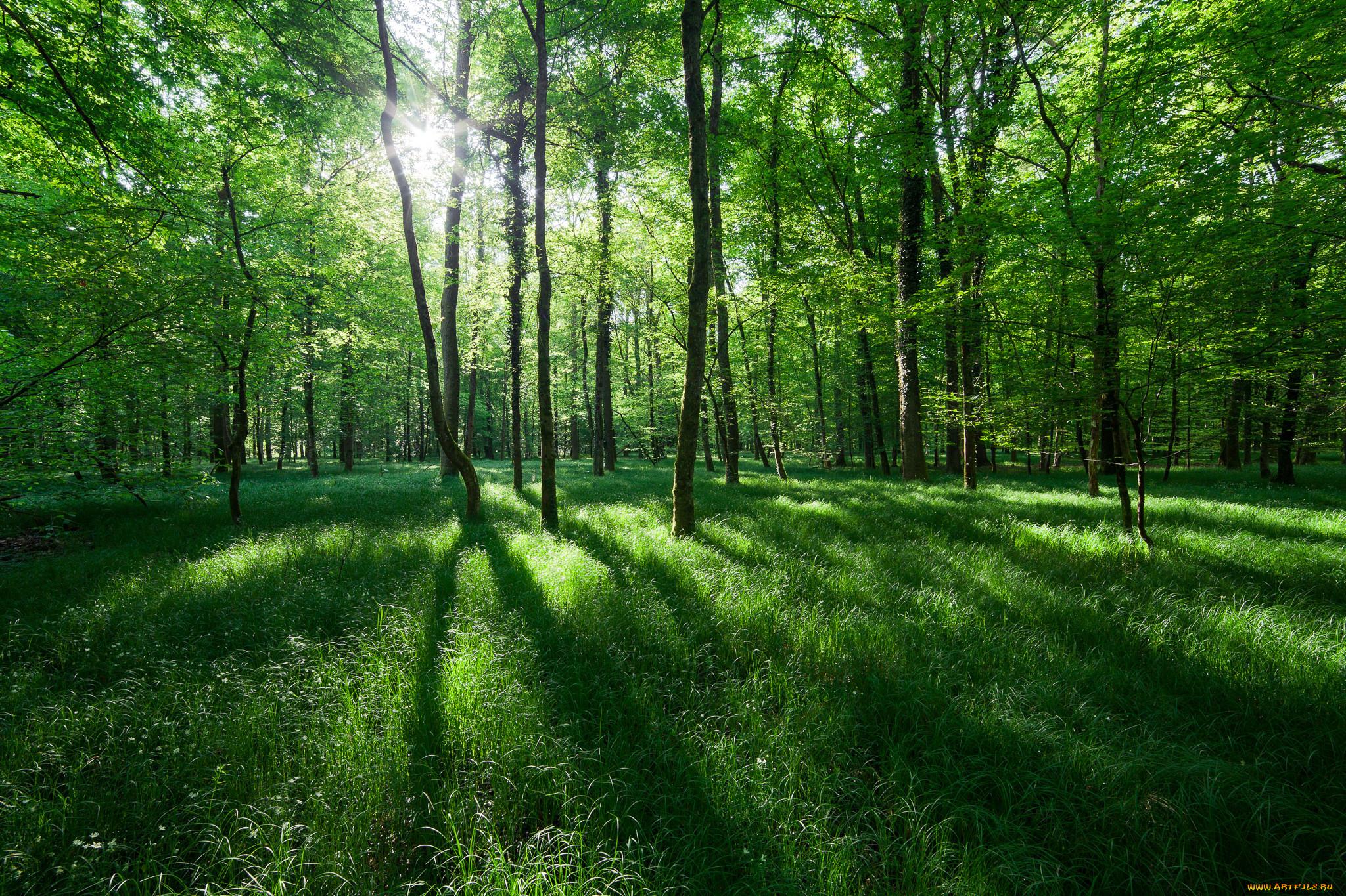 Картинки лес природа зелень